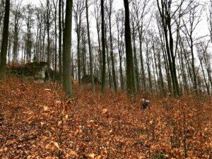 Read more about the article Winterklettern an den Dögeroder Klippen